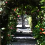 10 Jardim