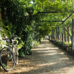 7 Bicicl